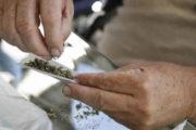 بنزرت: ايقاف شخص بحوزته كمية من مخدر القنب الهندي و اقراص مخدرة نوع اكستازي