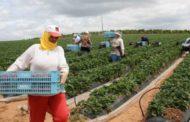 تسجيل فائض في الميزان التجاري الغذائي بــ 222.6 مليون دينار  خلال الثلاثية الأولى 2018