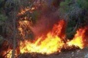 إخماد حريق بجهة أريانة قدّرت فيه المساحة المحترقة بحوالي 08 هكتارات