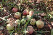بــــــرقــــــــو: تسجيل أضرار في المحاصيل الزراعية والاشجار المثمرة بعد الأمطار الأخيرة
