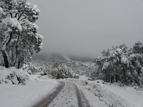 وصلت الى 600 متر بالمرتفعات صور الثلوج في عين دراهم وجندوبة