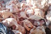 الكشف عن مذبح عشوائي للدجاج بالتضامن