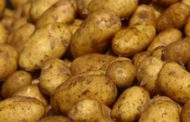 إتحاد الفلاحين يندد ويطالب وزارة التجارة بسحب كميات البطاطا الموردة