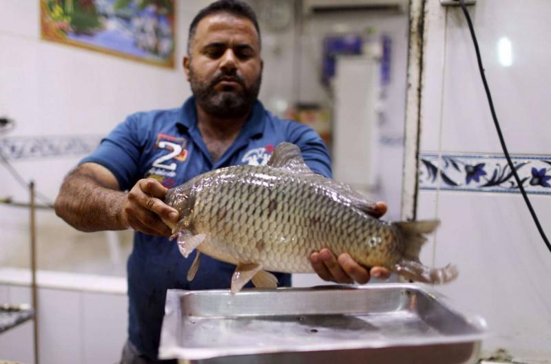 المصالح البيطرية تنصح المستهلك باقتناء أسماك التربية التي تستجيب لمعايير الطراوة