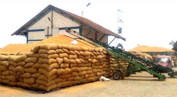 مع إنطلاق موسم الحصاد... مراكز تجميع الحبوب ترفض قبول محاصيل الفلاحين بباجة