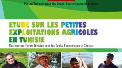 """صورة تونس: إطلاق دراسة حول المستغلات الفلاحية الصغرى تحت عنوان """"المستغلات الفلاحية الصغرى في تونس"""""""